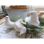 couple de colombes blanches artificielles