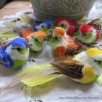petits oiseaux de toutes les couleurs