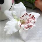 Orchidée tête de fleur